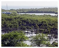 The Mangroves and oyster beds in Tyrell Bay, seen from the Blue Marlin Apartment.