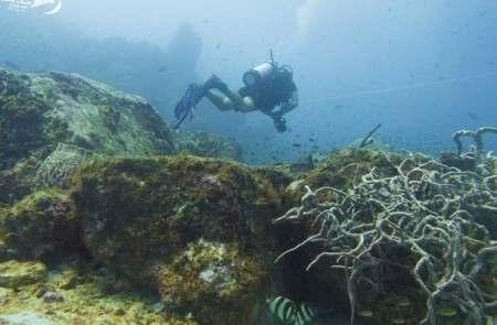 Scuba diving Carriacou.