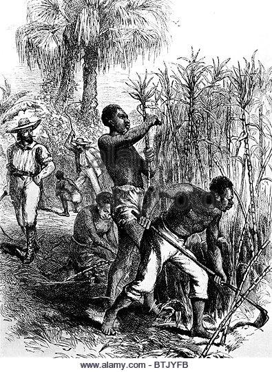 slavery in caribbean history The history of the caribbean is rich with adventurous tales, blended cultures, and natural diversity the impact of colonialism and slavery can still be seen in many of the island cultures today so much so, in fact, that travelers often note a sense of living with the near-tangible history that permeates the region.