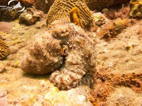 Limekiln diving spot Carriacou.