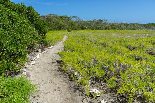 Path to petite Carenage beach on Carriacou.