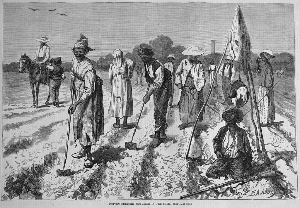 Supervisors watchoing slaves on a cotton field.