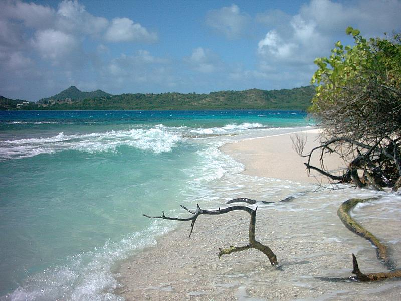 A narrow stretch of beach on White Island North shore.